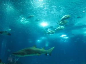 Dá até para dormir com os tubarões