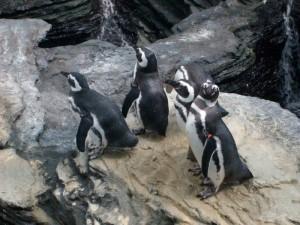 Os simpáticos pinguins ficam em uma área externa