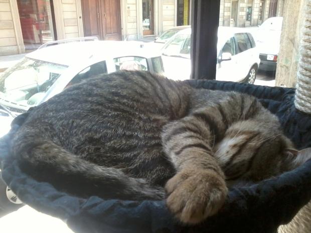 Esse gato passou o tempo todo dormindo