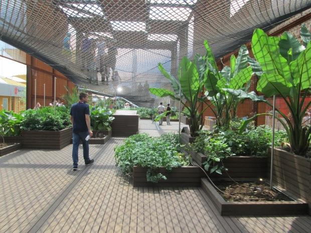 No pavilhão há amostras de algumas plantas brasileiras