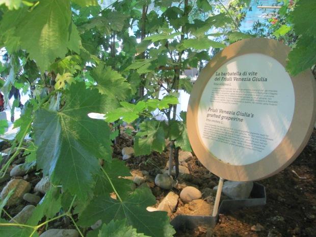 Planta da região Friuli Venezia Giulia