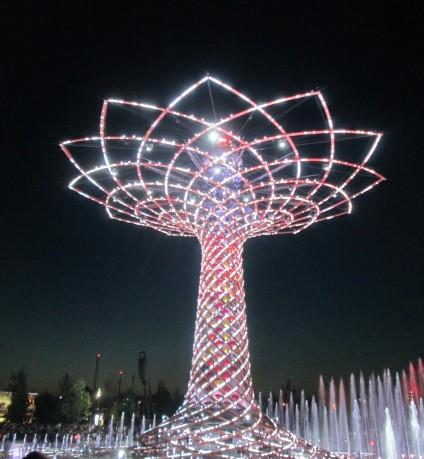 Espetáculo noturno na árvore da vida