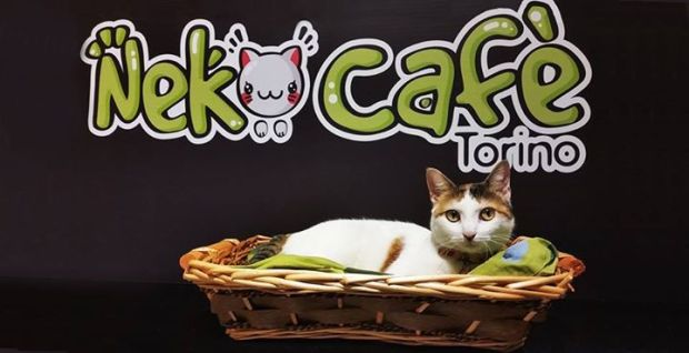 Um dos gatos do Neko Café