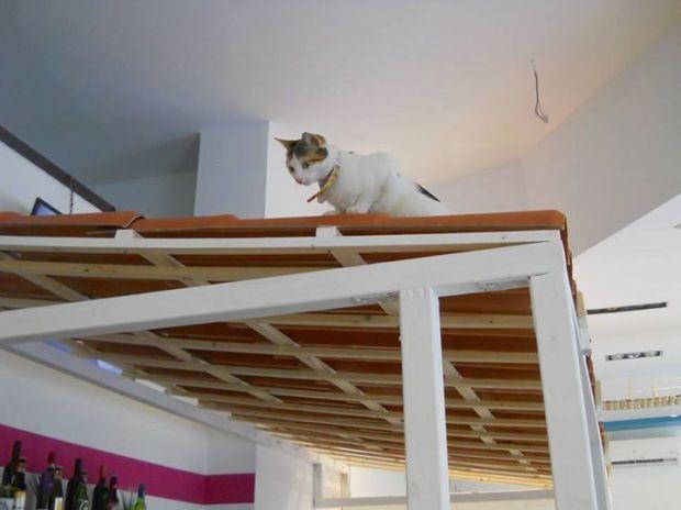 Os gatos têm vários circuitos dentro do café