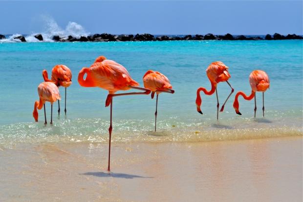 2 - Flamingos_na_Renaissance_Island_Aruba_Credito_ATA